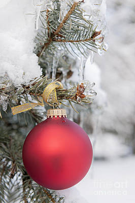 Red Christmas Ornament On Snowy Tree Poster by Elena Elisseeva