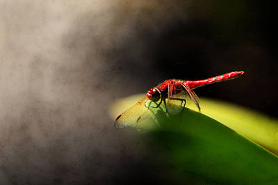 Red Dragonfly And Smoke Poster by Sally Bauer