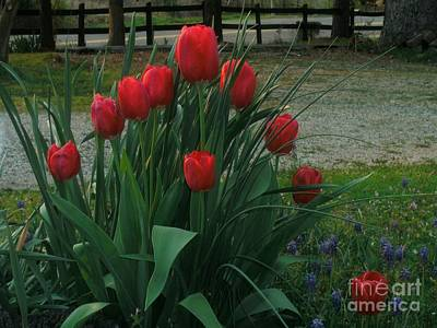 Red Dynasty Red Tulips Poster by Kip DeVore