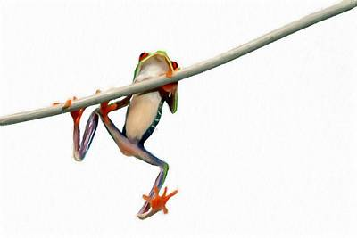 Red Eyed Tree Frog 3 Poster
