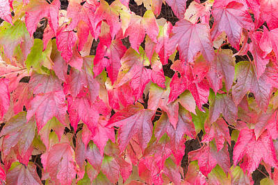 Red Fall Poster by Semmick Photo