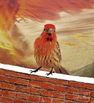 Red Finch On Red Brick Poster by Janette Boyd