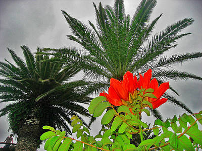 Red Flower. Palma. Canary Islands. Poster