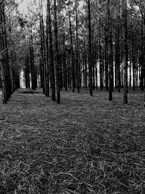 Red Forest In Black And White Poster