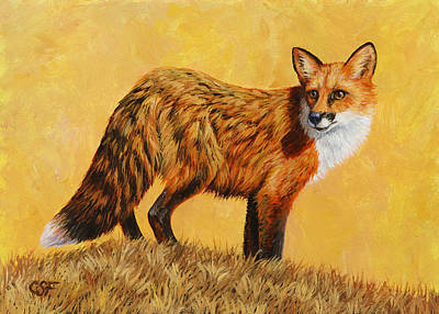 Red Fox Painting - Looking Back Poster