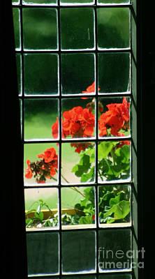 Red Geranium Through Leaded Window Poster