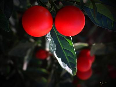 Red Hot Chili Pepper Poster by Ernestine Manowarda
