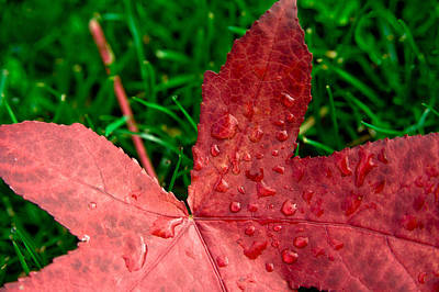 Poster featuring the photograph Red Leaf by Crystal Hoeveler