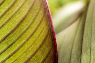 Red Leaf Edge Poster by Marina Kojukhova