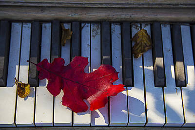 Red Leaf On Old Piano Keys Poster
