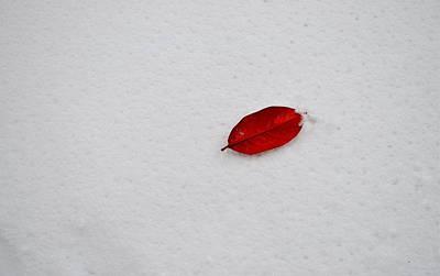 Red Leaf Snow Poster
