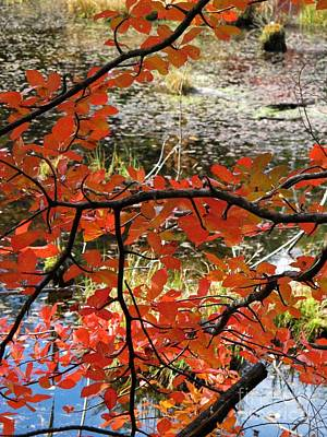 Red Leaves By The Pond Poster by Linda Marcille