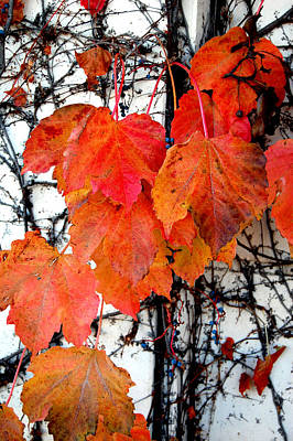Red Leaves Of Fall Poster