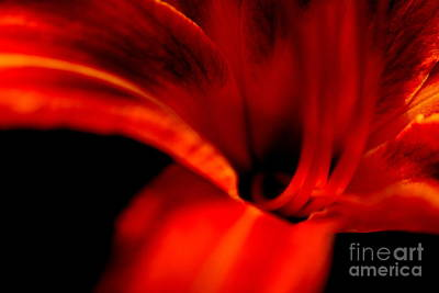 Red Orange Lily Travels  Poster by Neal Eslinger