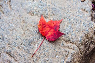 Red Maple Leaf On Granite Stone In Horizontal Format Poster by Karen Stephenson