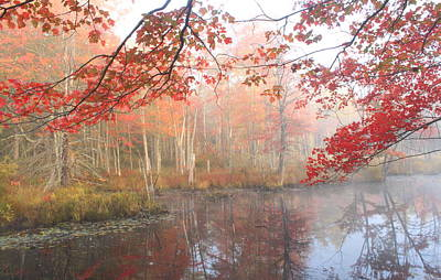 Red Maple Wetland Fall Foliage Poster by John Burk