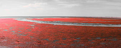 Red Marshland Poster by Skander Do