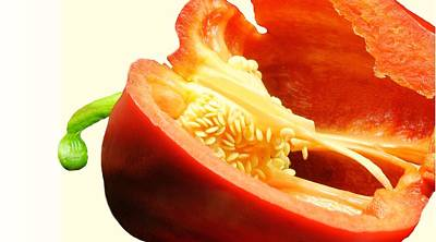 Red Pepper Seeds Poster by Diana Angstadt