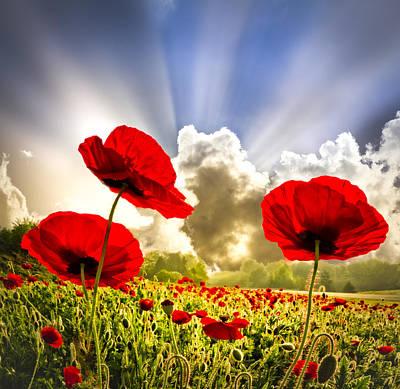 Red Poppies Poster by Debra and Dave Vanderlaan