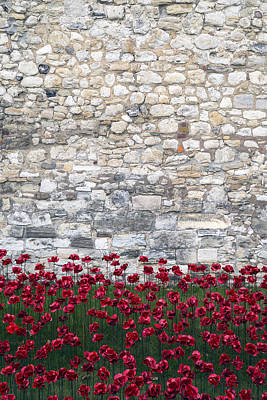 Red Poppies Poster by Joana Kruse