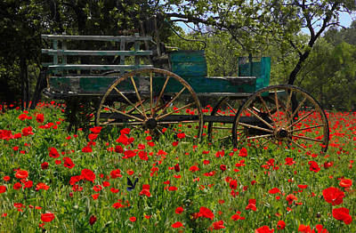 Red Poppies With Wagon Poster