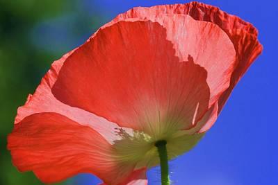 Red Poppy Poster by Rebeka Dove