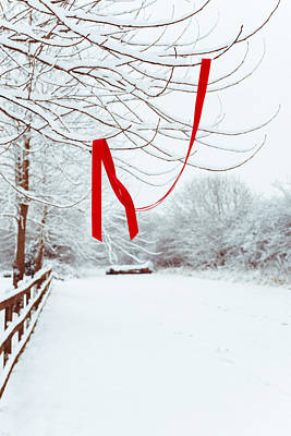 Red Ribbon In Tree Poster by Amanda Elwell