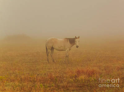 Red Roan In Mist Poster by Robert Frederick