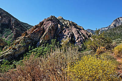 Red Rock Canyon With Foliage Poster by Judy Vincent