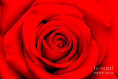 Red Rose 1 Poster by Az Jackson