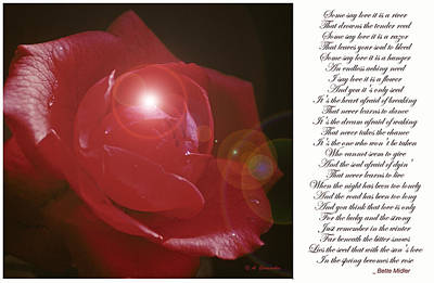 Red Rose Poster by A Gurmankin