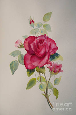 Poster featuring the painting Red Rose by Beatrice Cloake
