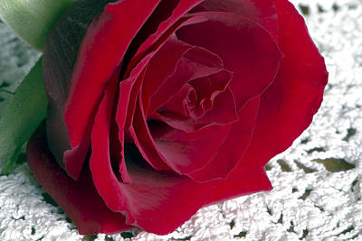 Red Rose On Lace Poster by Sharon Talson