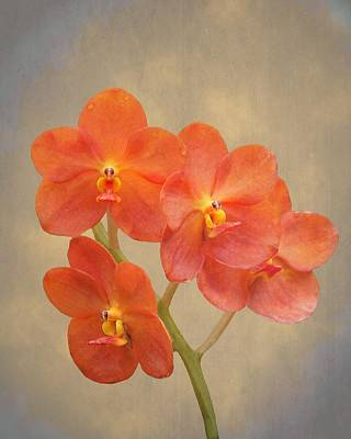 Red Scarlet Orchid On Grunge Poster