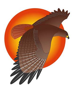 Red Tail Hawk And Sun Poster
