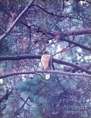 Poster featuring the photograph Red Tail Hawk by Cynthia Marcopulos