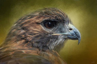 Red Tailed Hawk At Reelfoot Poster by Jai Johnson