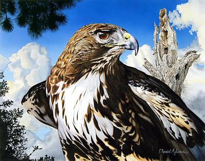 Da141 Red Tailed Hawk By Daniel Adams Poster