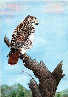 Poster featuring the painting Red Tailed Hawk by VLee Watson
