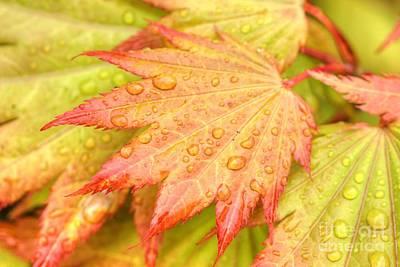 Red Tip Leaf Poster