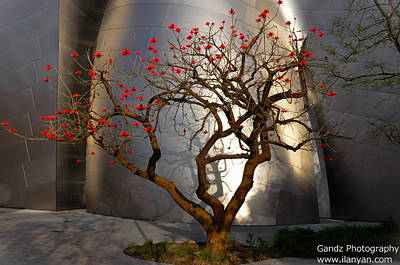 Poster featuring the photograph Red Tree  by Gandz Photography