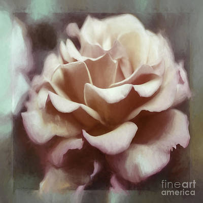 Poster featuring the photograph Red White Rose by Jean OKeeffe Macro Abundance Art