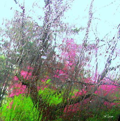 Redbud Trees Poster