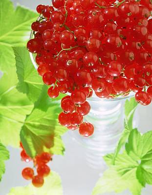Redcurrants And Leaves Poster by Norman Hollands