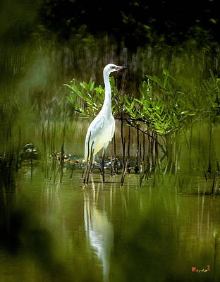 Poster featuring the photograph Reddish Egret 9c by Gerry Gantt