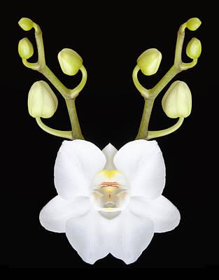 Redindeer Orchid Poster by Robert Jensen