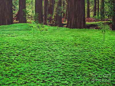 Redwood Carpet Poster by L J Oakes