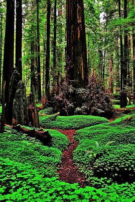 Redwoods Wonderland Poster