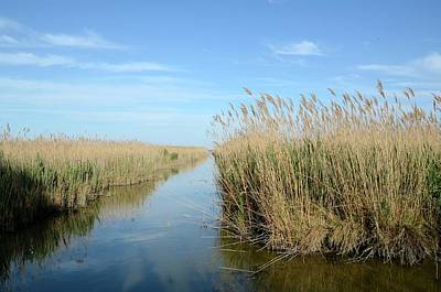 Reed Beds Poster