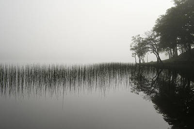 Reeds And Shore In The Mist Poster by Gary Eason